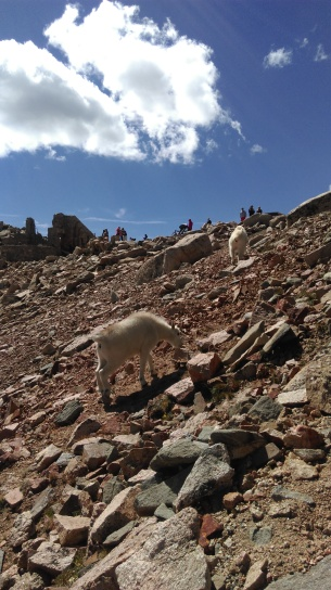 Mountain goats wandered past our perch up towards a barking dog and talking humans
